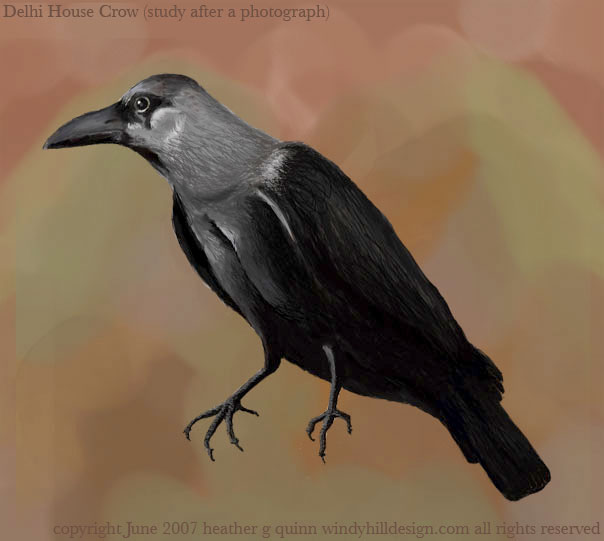 New Delhi House Crow